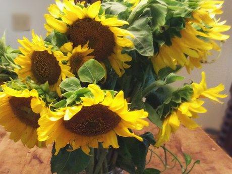 Sunflowers Magnet Postcard