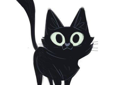 Cute Black Cat Pictures