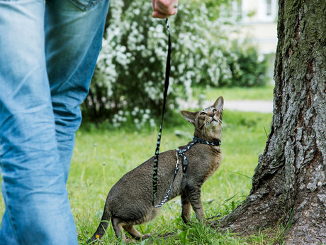 Cat behaviorist 60 minute consult