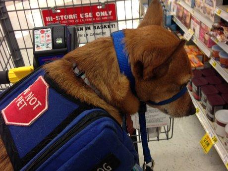Ask a Service Dog Handler/Trainer