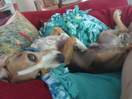 Dog consultation