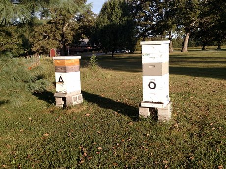 Beginning Beekeeping Q&A - 30 min