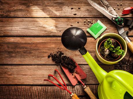 Prairie Clover : Gardening