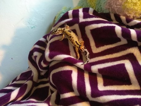 Pictures of my Leopard Gecko