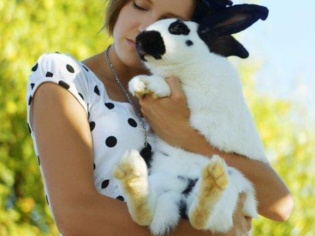 Pet Rabbit Ownership