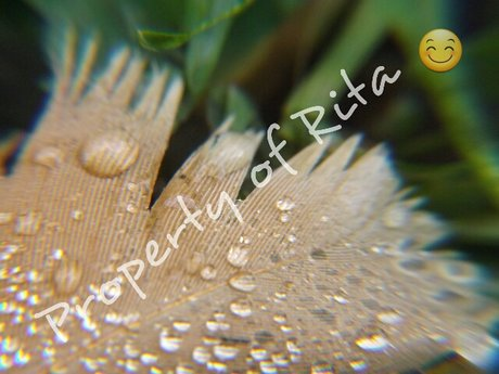 Original macro feather