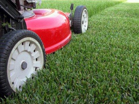 Lawn mow - medium yard