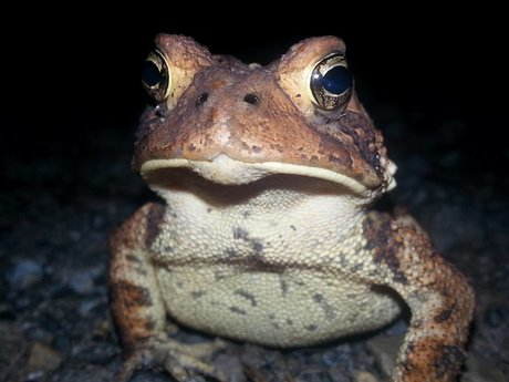 I will send you  picture of  toad