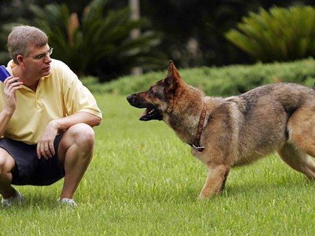 Virtual Dog Training