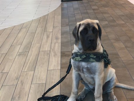 Tails and Treats Dog Training