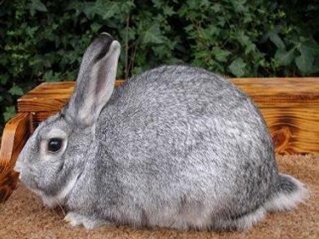 Raising Rabbits 101