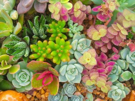Succulent Tips!