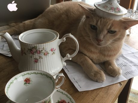 """hat"" on cat photo"