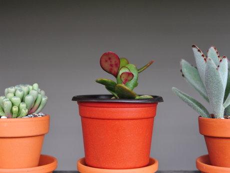 Plant care 🌱