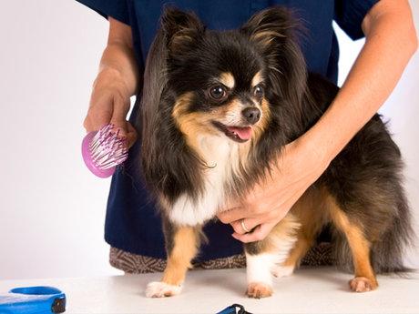 Dog/Cat/Ferret Nail Trim