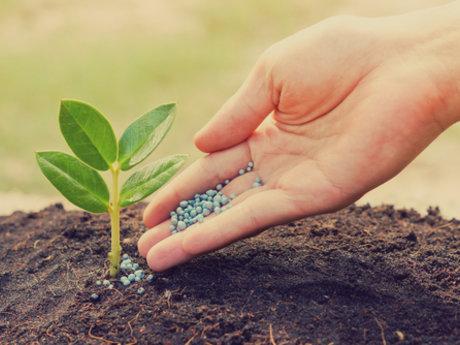 Fertilizer Quick Q & A