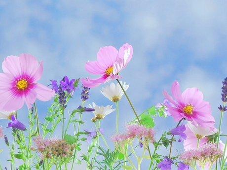 Wildflowers Magnet Postcard