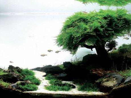 Fish tank aquascape design