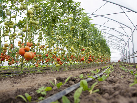 30 min organic farm/garden consult
