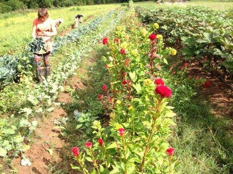 Ask an organic farmer