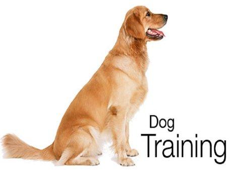 30 min Dog Training Session