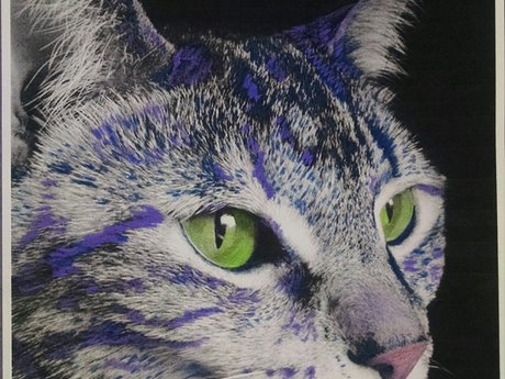 Hand colored pet portraits
