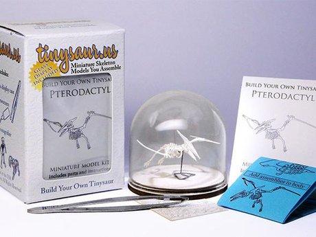 Tinysaur - Pterodactyl Deluxe Kit