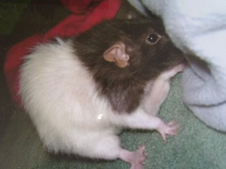 15 Minutes Of Rat Advice Or Love!