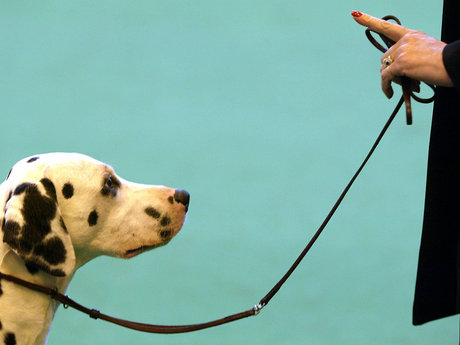 Dog Walking or Training