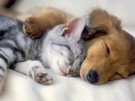Love Your Pet Holistically 101