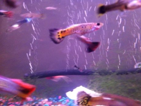 How to kickstart a fish tank!
