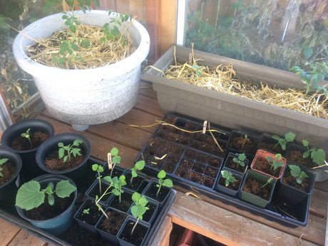 Garden Planning and Seed Swap