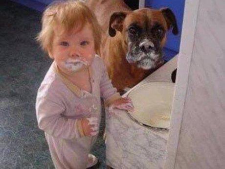 Babysitter/Dog-sitter