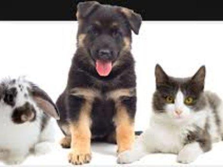 Training and animal behavior