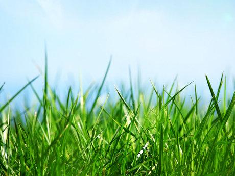 Lawn care.
