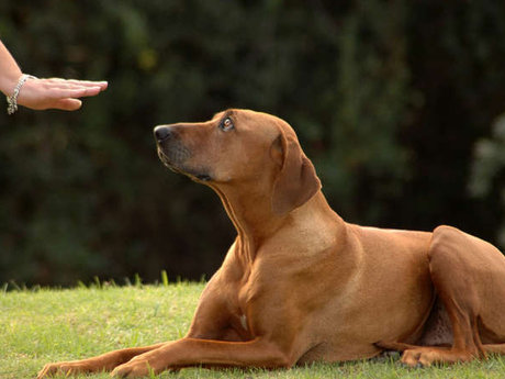 60 minute dog obedience training