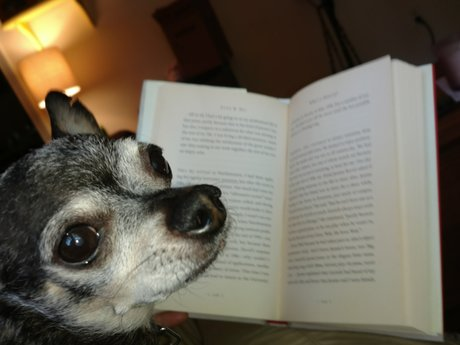 Pet Books that I Love!