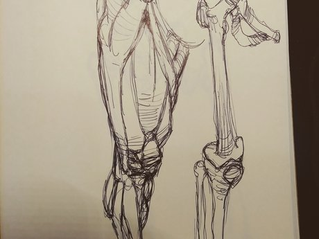 Anatomy Drawing Lesson