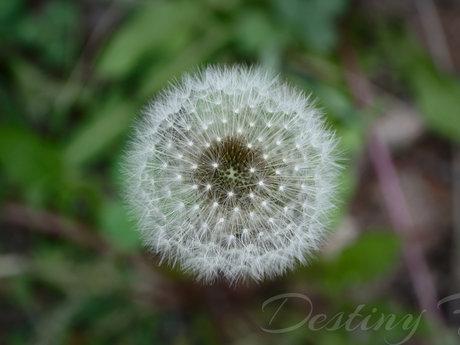 The Wishing Flower