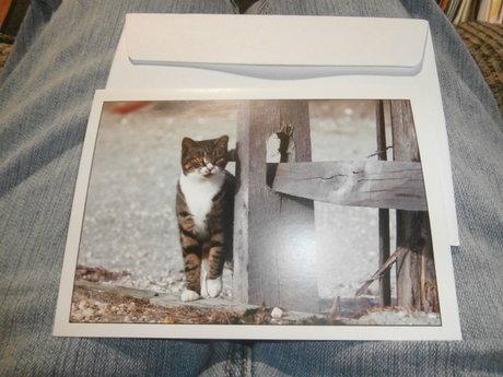 Blank Cat Greeting Card