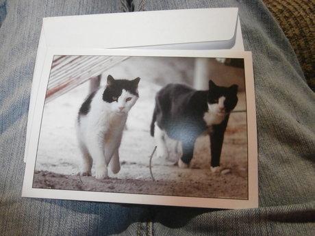 Blank Cat Card