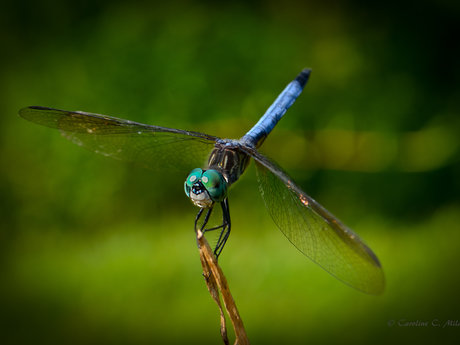 5.88MG Digital Photo of Dragonfly