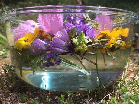 45 Min Flower Essence Consultation