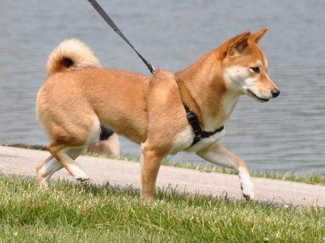 1 hour dog walking