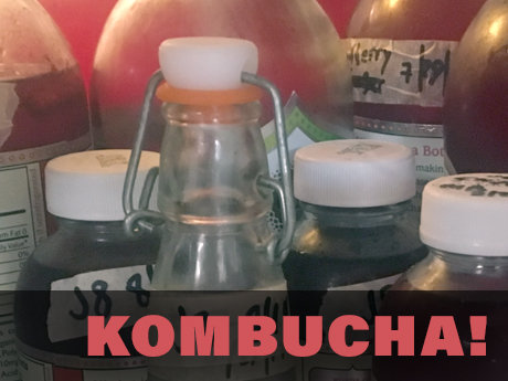 Brew your own kombucha or jun