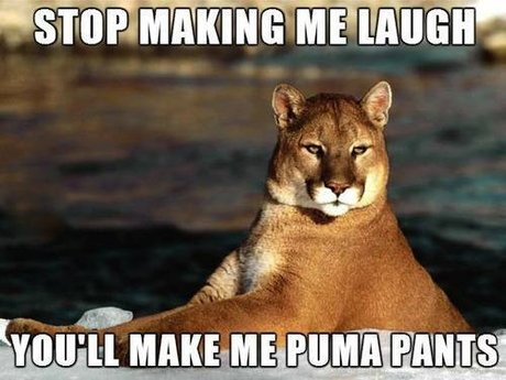 Learn bad puns!