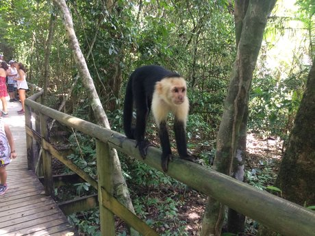 Advice re: traveling to Costa Rica