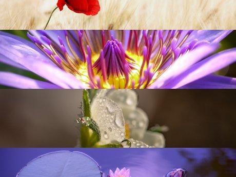 4 Flower Photograph Wallpapers