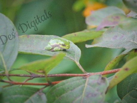 Leafy Nap