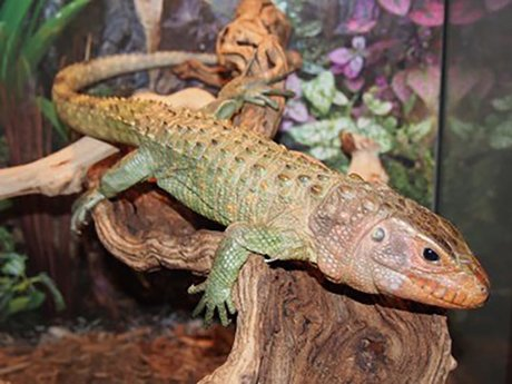 Reptile Husbandry and Breeding